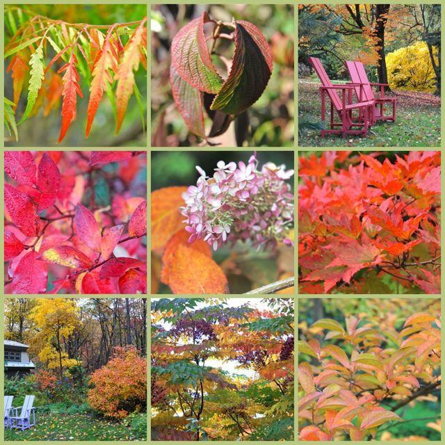 12 Árboles y arbustos para un gran color de follaje otoñal