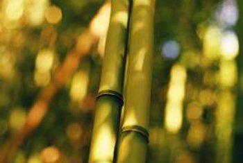 ¿Cuál es la diferencia entre agrupar y no colgar bambú?