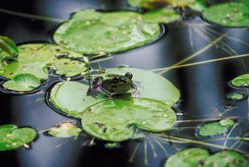 Estanques y ranas de patio trasero