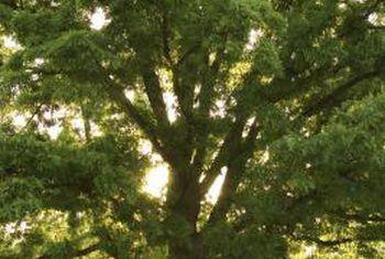 Cómo eliminar la corteza de árbol para matar un árbol
