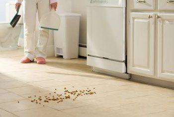 Control orgánico para hormigas de pavimento en la casa