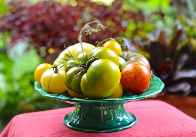 Preguntas frecuentes sobre el cultivo del tomate