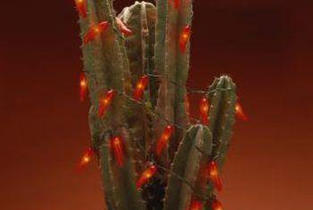 ¿Qué tipo de tierra vegetal es para cactus?